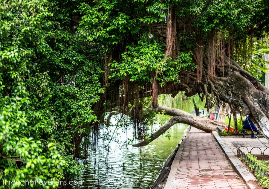 Hanoi in January is relatively warm, green, and has comfortable temperature to explore the town