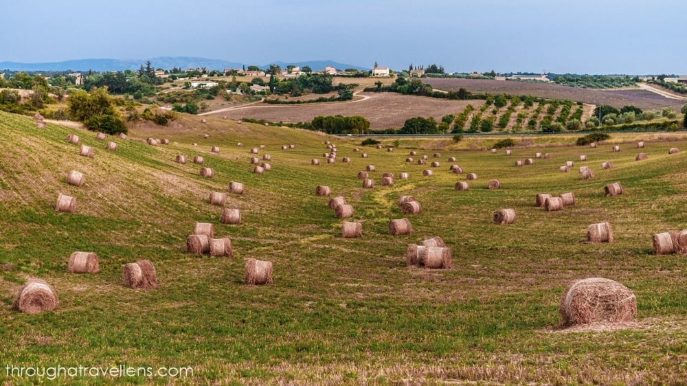 What to do in Provence? Stop by every field and take lots of pictures