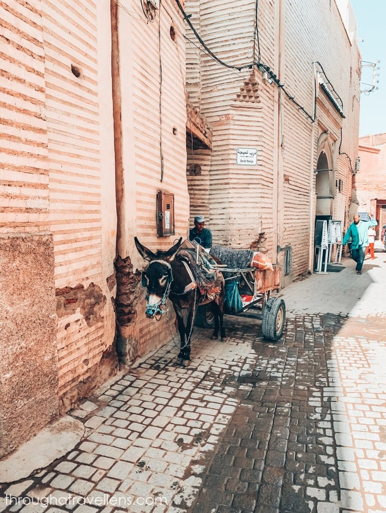 What to do in Marrakech? Wander the streets of Medine