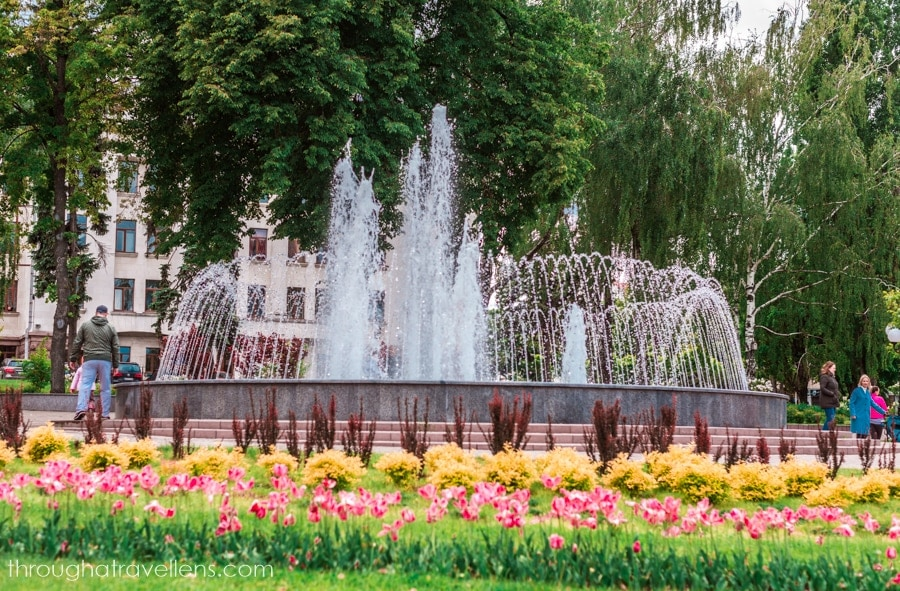 Blossoming tulips in Chernihiv