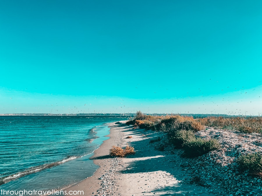 The wildlife of the Kinburn Spit National Park in Ukraine, and area perfect for camping