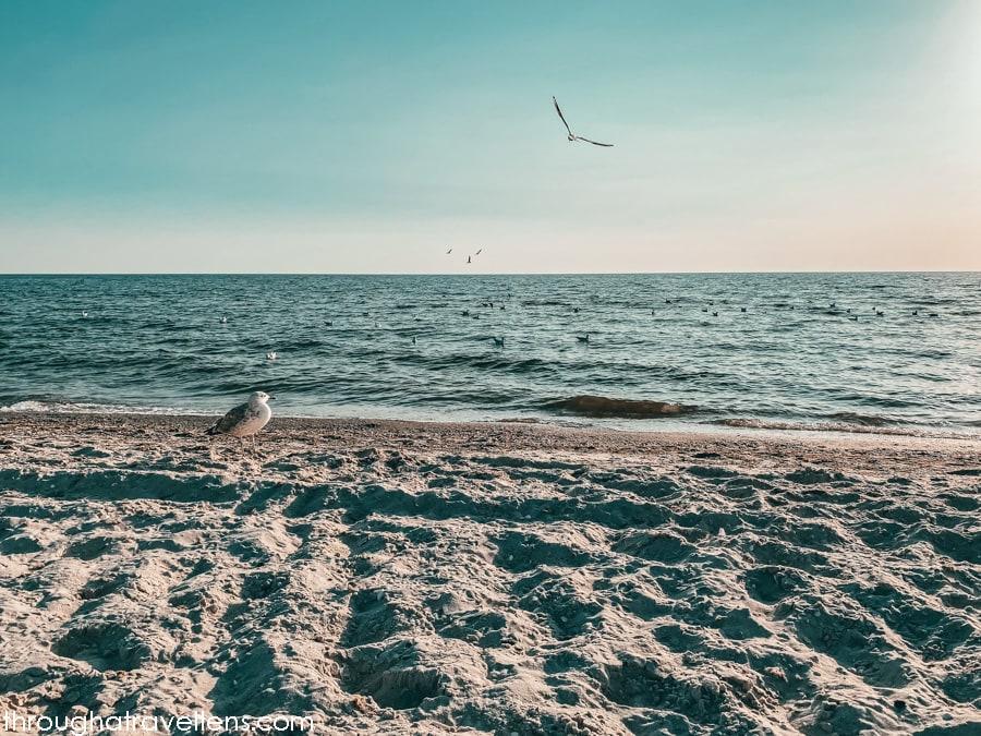 Seagulls and sunset, the Kinburn Spit National Park, Ukraine