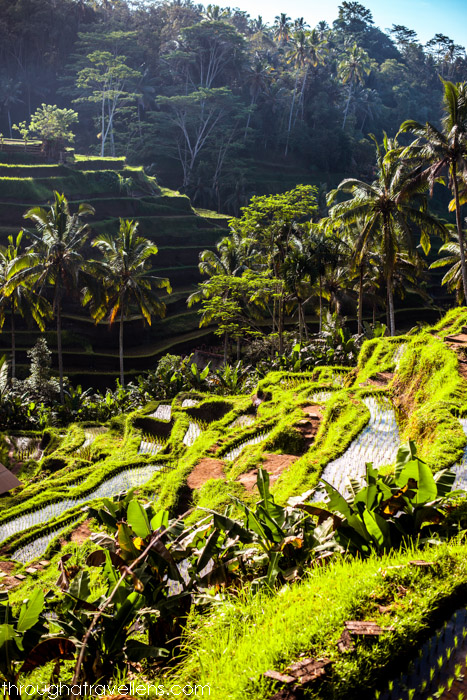 Best Day Trips from Ubud 3.jpg
